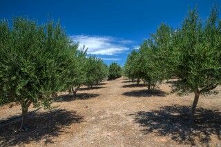 green villa casa del sol trees