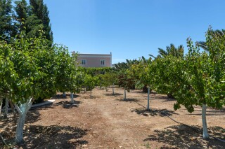 eco-friendly casa del sol olive grove