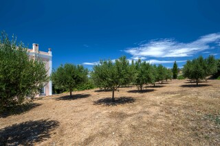 eco-friendly casa del sol olive trees